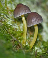 Zwei Liebende im tiefen Wald! - Deux amoureux!