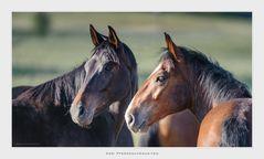 Zwei Pferdeschönheiten