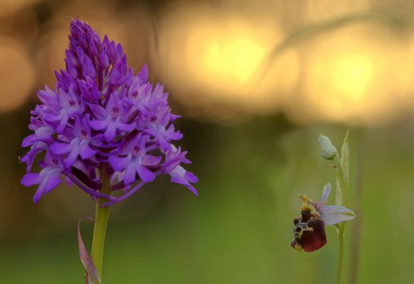 Rote Orchidee Fotos & Bilder auf fotocommunity