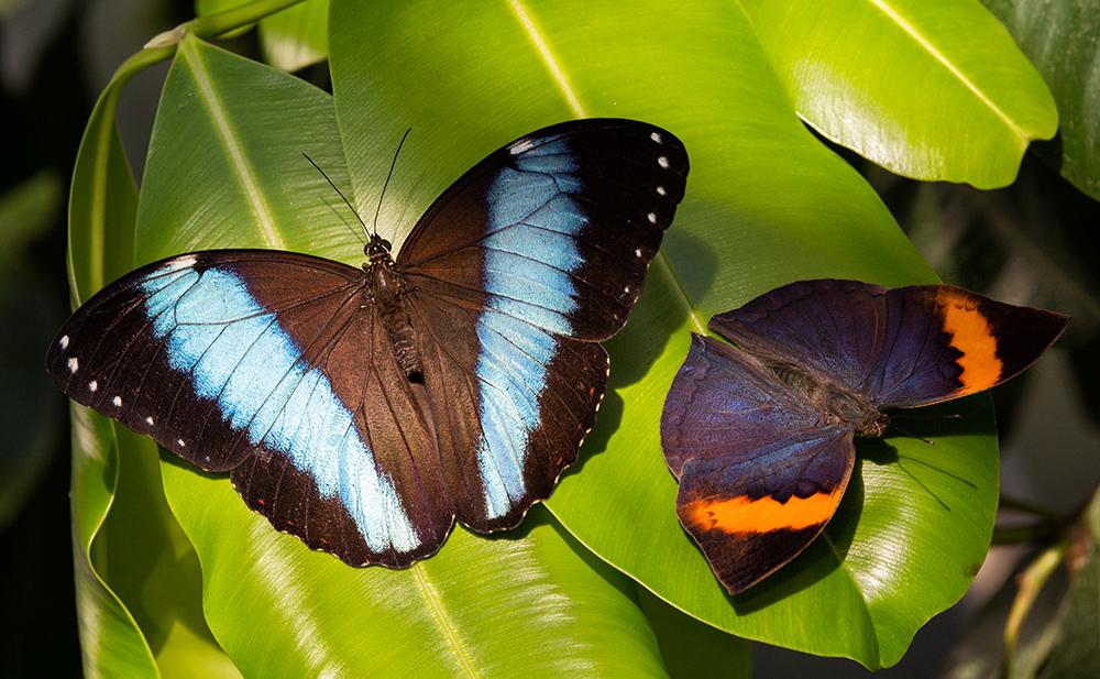 Zwei Schmetterlinge Sonnen Sich Im Botanischen Garten München Foto