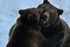 Zwei Schmusebären