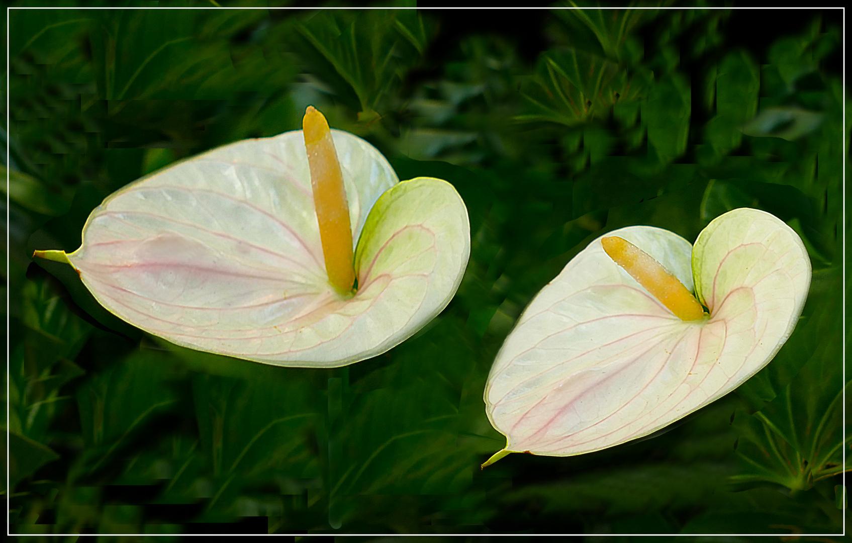 Zwei Schönheiten