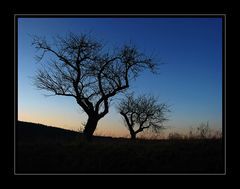 Zwei Spessart Apfelbäume