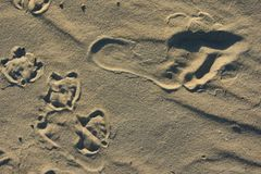 zwei Spuren im Sand