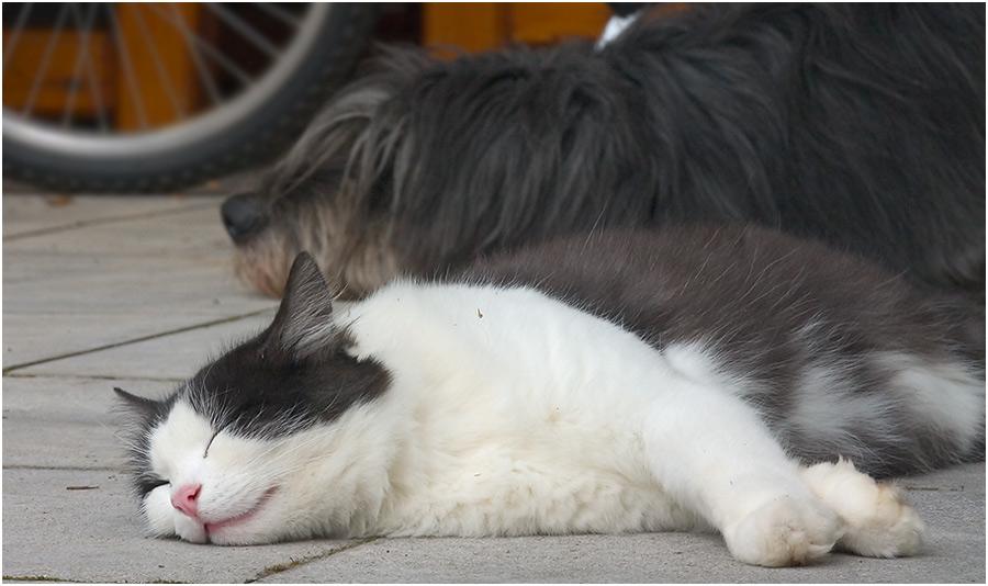 Zwei wie Hund und Katz