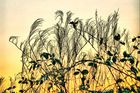 Zweig Blätter Farn