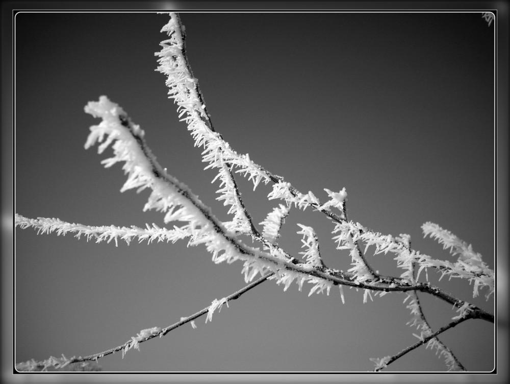 Zweig im Winter