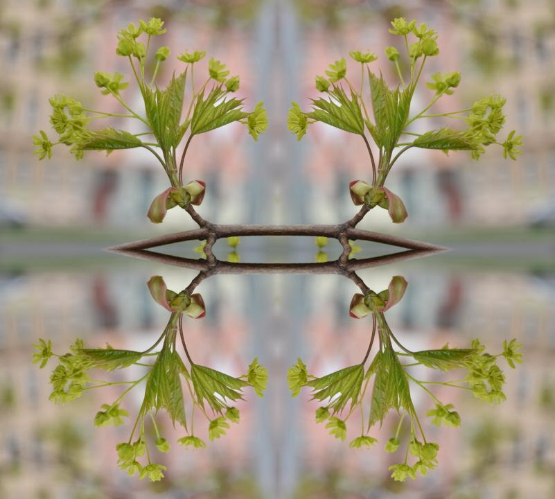 Zweig mit Blüte