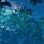 Zweige die sich in türkis blauen Wasser wieder finden