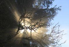 Zweige im Nebel