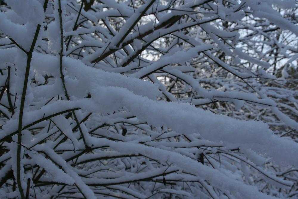 Zweige im Schnee