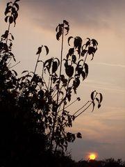 Zweige im Sonnenuntergang
