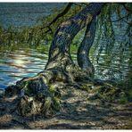 Zweige im Wasser