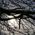 Zweigstelle der Sonne