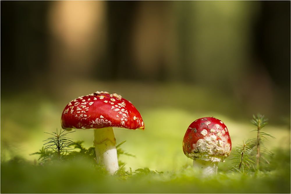Zweisamkeit im Wald