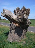 Zwergenbaum