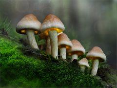 Zwergenwald