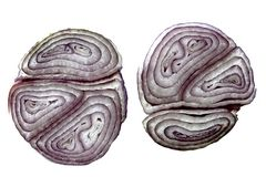Zwiebel ohne Bearbeitung