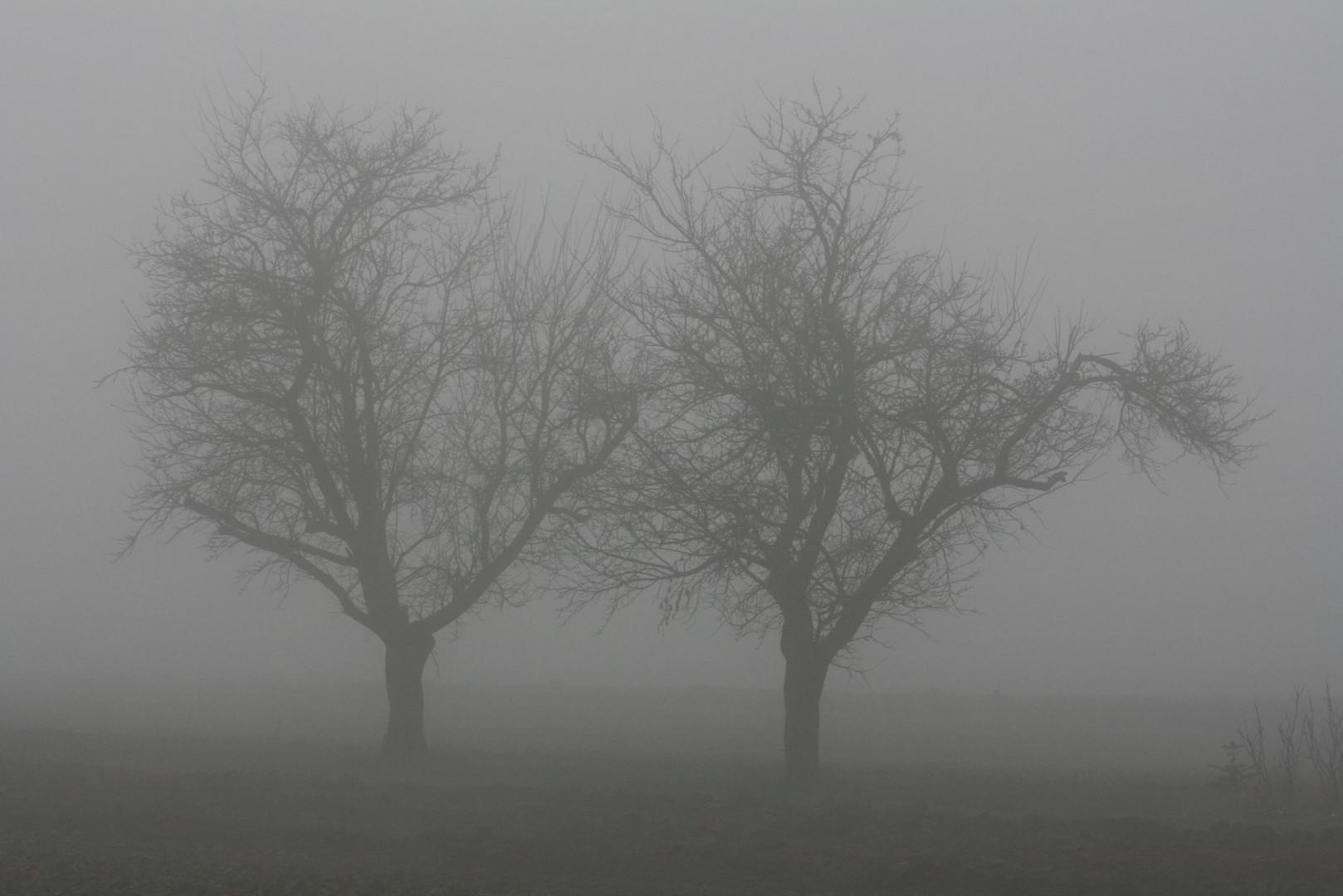 Zwillinge im Nebel