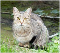 Zwinger-Katze