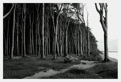 Zwischen Baum und Borke ...