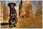 Zwischen Baum und Borke [HDRi]