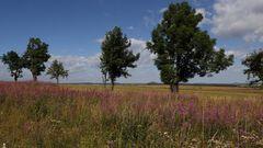 Zwischen den Bäumen am Horizont ist Sachsen ...