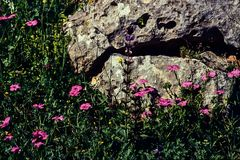 Zwischen den Felsen.   .120_3722