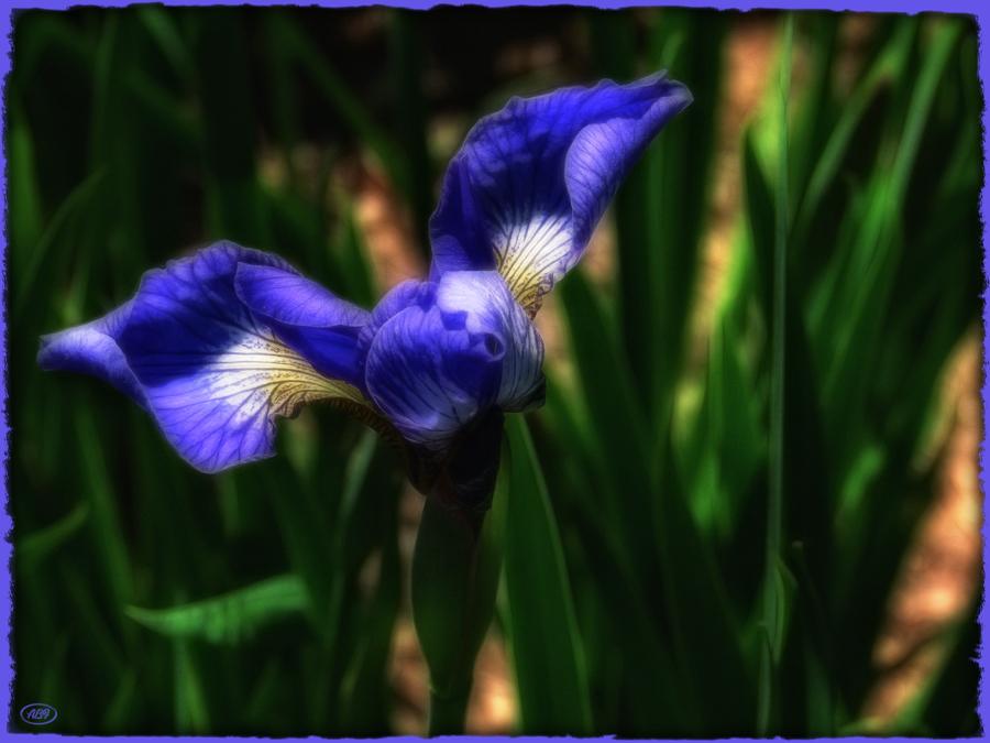 Zwischen einer Blume und einem Vogel...