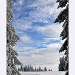 Zwischen hohen Schwarzwaldtannen