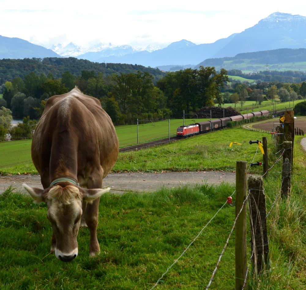 Zwischen Kuh und Rigi