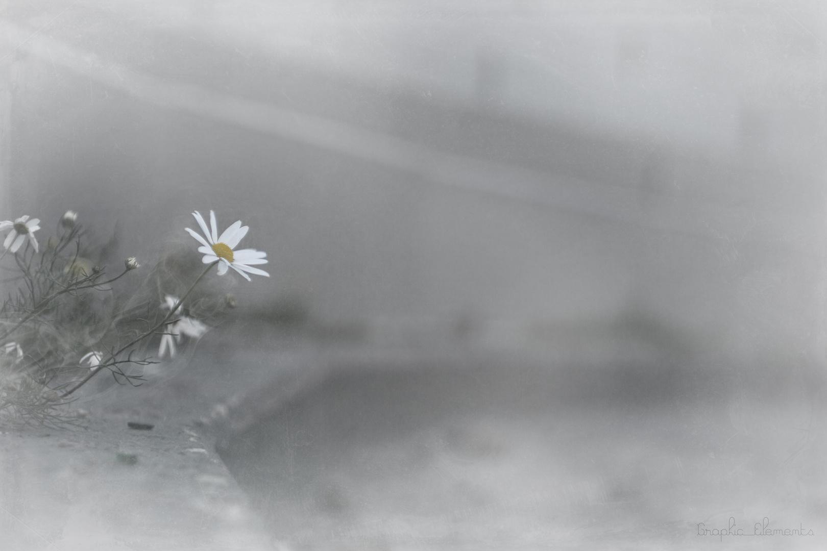 zwischen Leben und Tod