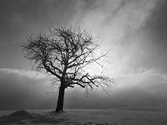 Zwischen Nebel und Sonne