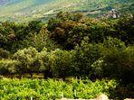 Zwischen Olivenplantagen und Weinreben