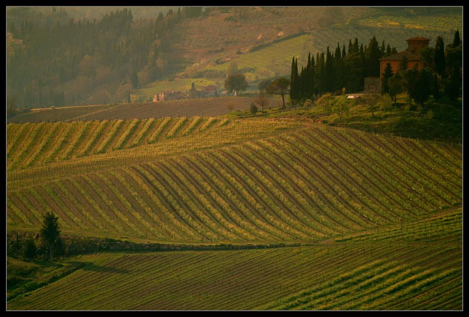zwischen Siena und Florenz I