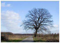 Zwischen Winter und Frühling.....